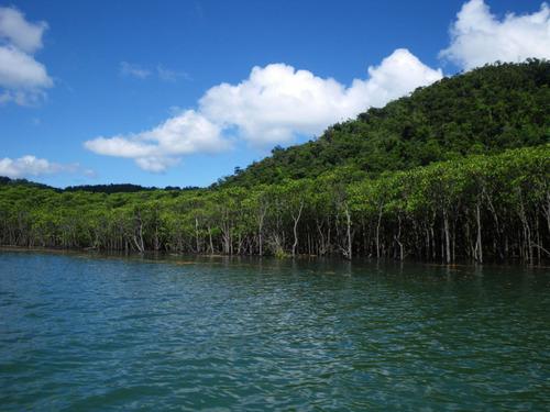 西表島ナーラの滝201108-4