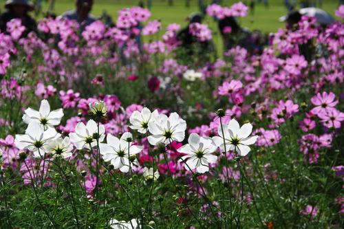 昭和記念公園201010-10