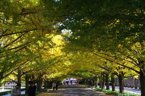 昭和記念公園201011-11