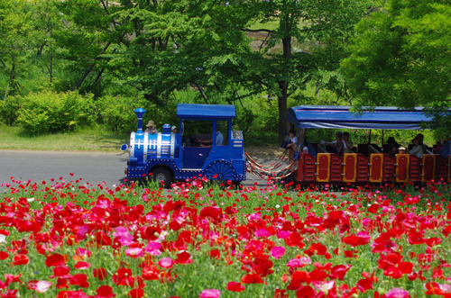 昭和記念公園201105-7