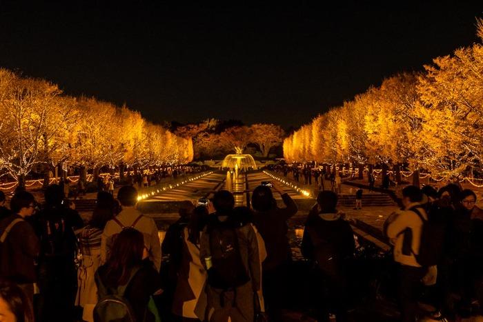 昭和記念公園イチョウ並木ライトアップ2018