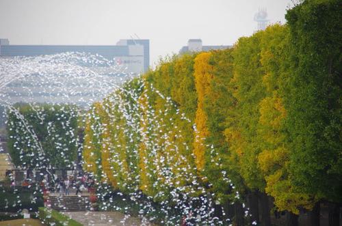 昭和記念公園201111-7