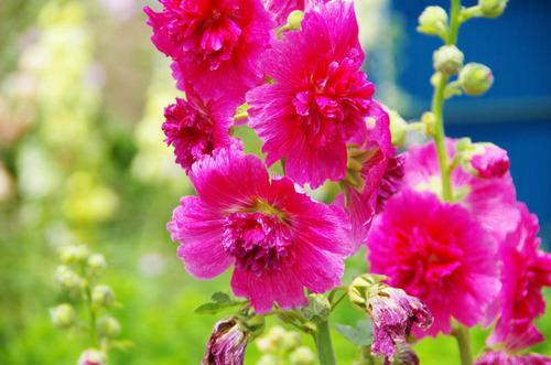 散歩道の夏の花-14