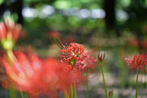 昭和記念公園201509-2