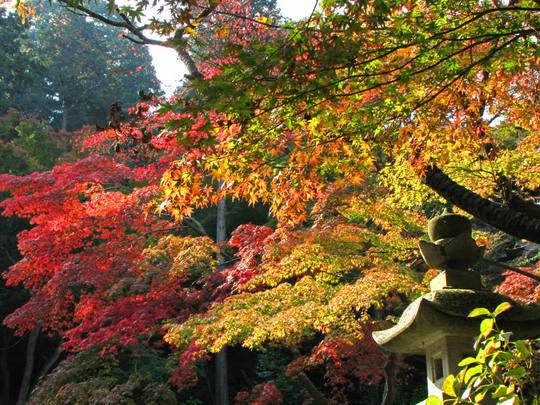 高幡不動尊20091107-4