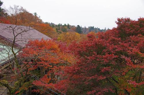 高尾山201111-17