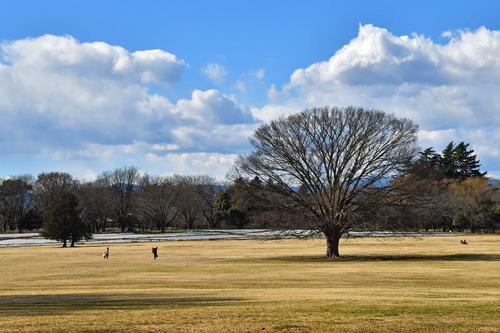 昭和記念公園201701