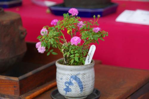 神代植物園2011-2