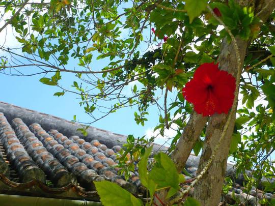 沖縄200808