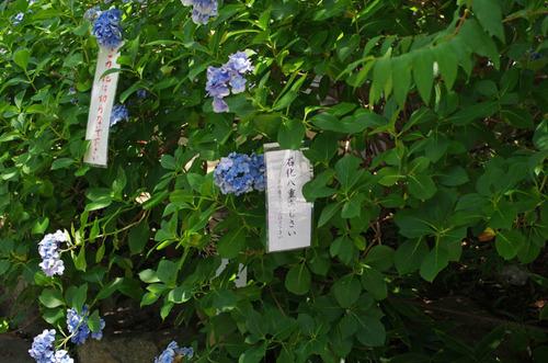 高幡不動20130715-3