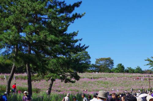 昭和記念公園201310-3