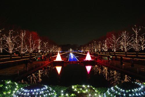 昭和記念公園イルミネーション201012-6
