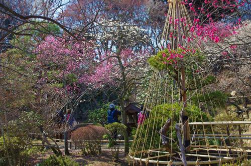京王百草園201403-9