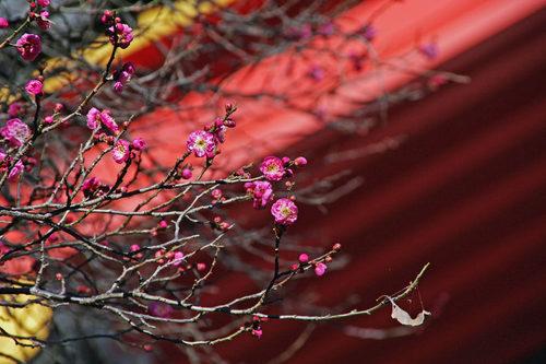 高幡不動尊20100124-3
