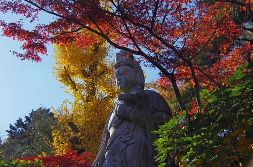 高幡不動尊201211-6