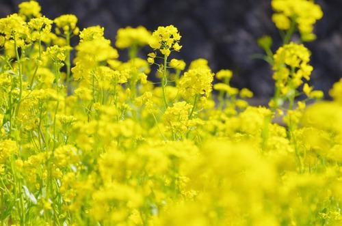 春の明るさ2012-2