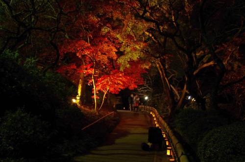 百草園紅葉ライトアップ201211-2