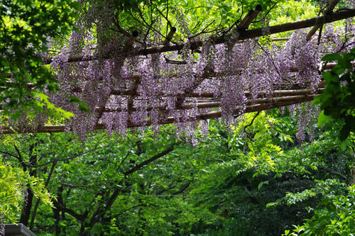 高幡不動尊201005-3