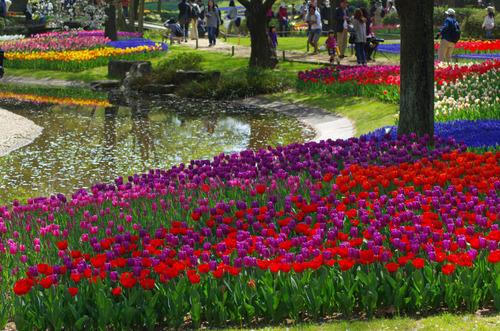 昭和記念公園201104-7