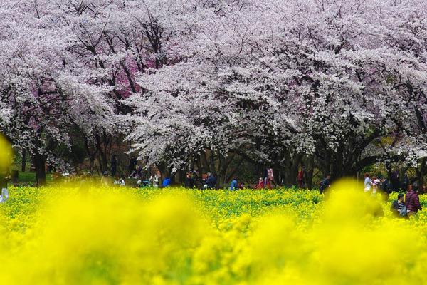 昭和記念公園201404