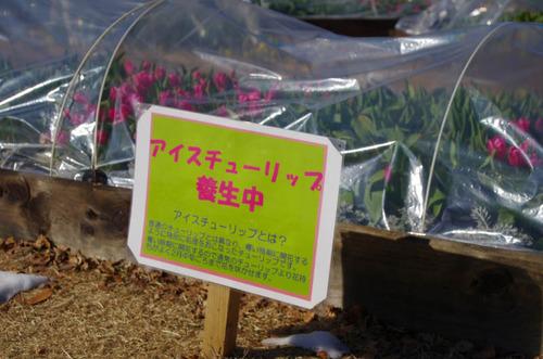 昭和記念公園201301-1