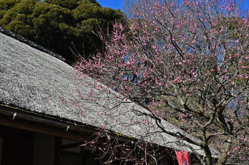 京王百草園201602-6