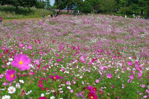 昭和記念公園2014-6