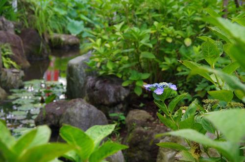高幡不動尊201107-10