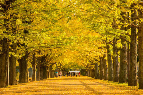 昭和記念公園201311-4