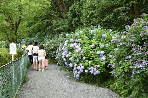 高幡不動尊201506-4