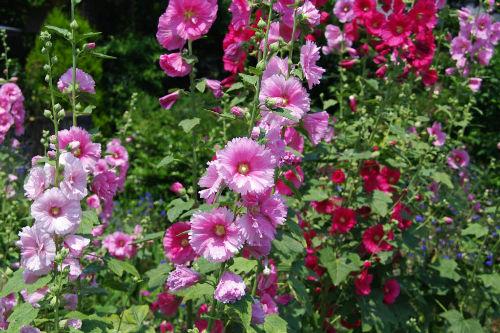 散歩道の花201006-4