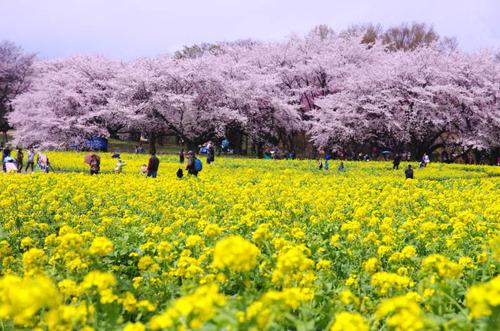 昭和記念公園201404-4