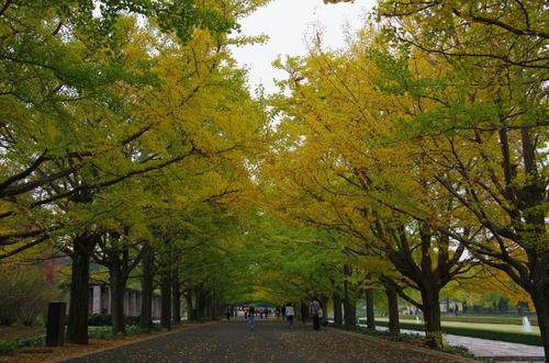 昭和記念公園201111-6