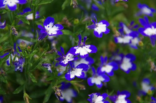 散歩道の夏の花-7