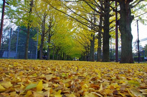昭和記念公園201311-3
