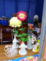 菊まつり変り花-12