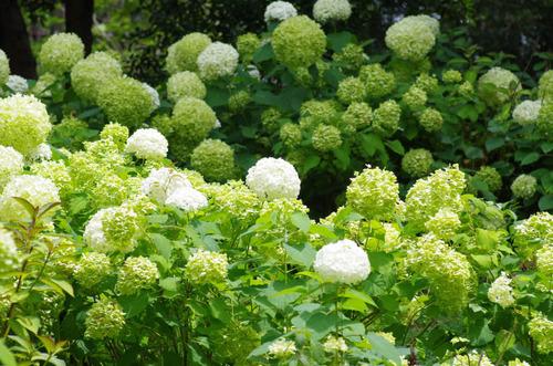 昭和記念公園201207-9