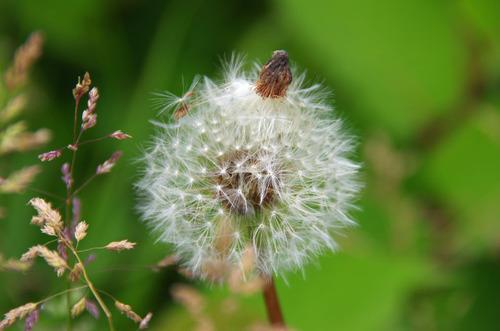 河川敷の花201106-14
