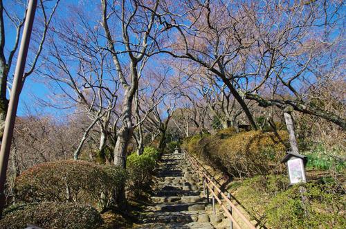 京王百草園201401-15
