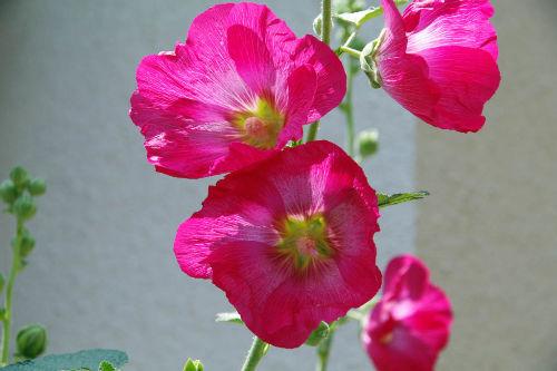 散歩道の花201006-3