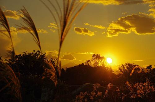 昭和記念公園夕景201211-4