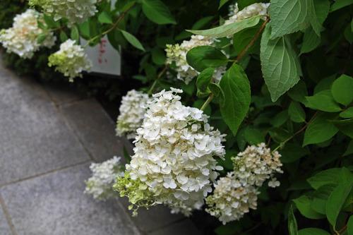 高幡不動尊20100731-11