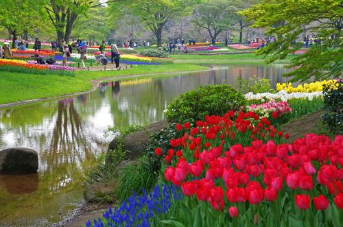 昭和記念公園201404-7