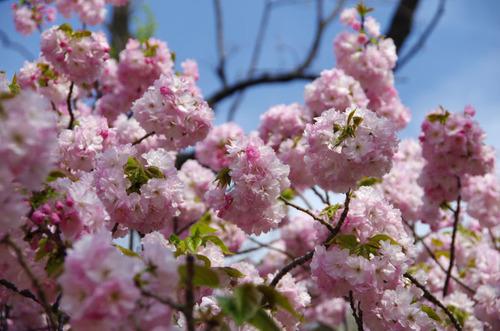 新宿御苑201104-6