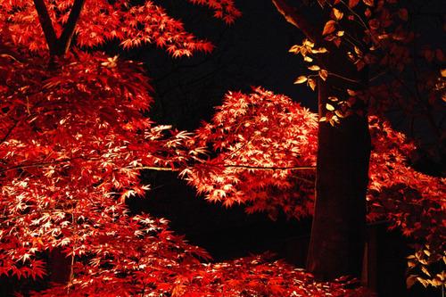 百草園ライトアップ2010-6