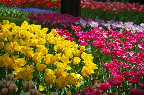 昭和記念公園201204-12