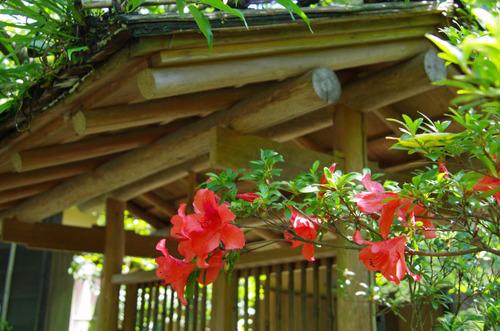 京王百草園201106-5
