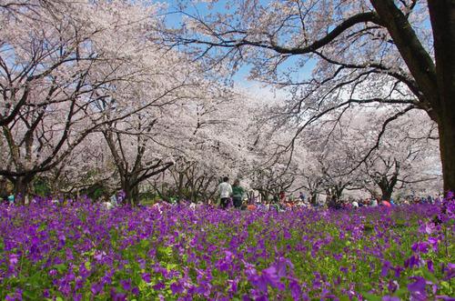 昭和記念公園201404-10