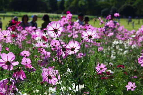 昭和記念公園201010-9