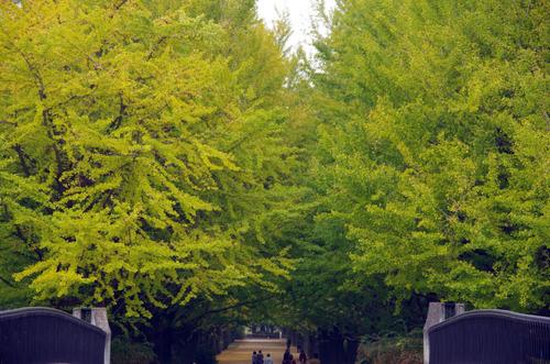 昭和記念公園201111-16